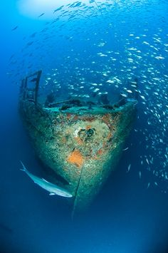 For centuries, the often-treacherous waters off the Outer Banks of North Carolina have claimed hundreds of seagoing vessels. Today, wreck-loving scuba divers can reap the benefits on dozens of sites that are well preserved, accessible and packed with marine life.