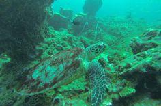 Bajo las aguas de Koh Phi Phi, Tailandia.