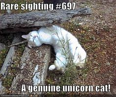 Google Image Result for http://icanhascheezburger.files.wordpress.com/2008/11/funny-pictures-you-have-found-the-rare-unicorn-cat.jpg