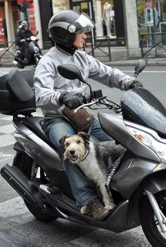 It's a dog's life in Paris