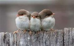 Three Small Birds