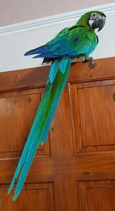 That's a lovely looking parrot Tropical Birds, Exotic Birds, Colorful Birds, Exotic Pets, Cute Birds, Pretty Birds, Beautiful Birds, Animals Beautiful, Parrot Pet