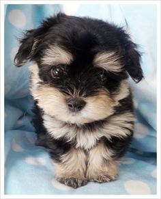 This looks like the baby version of my pup, Kiddo!