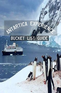 http://backpackerstory.org/antartica-experience/