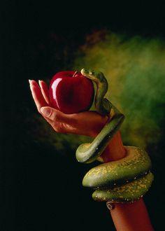 Eva Tempting to the Serpent Motif Serpent, Apple Tattoo, Adam Et Eve, Snake Art, Forbidden Fruit, Garden Of Eden, Snake Tattoo, Photoshop, Bible Art