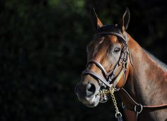 """American Pharoah's startled reaction to hearing someone saying the banned word """"Saratoga""""?  Saratoga lived up to its' reputation as the graveyard of favorites, but American Pharoah ran a huge race despite a long campaign. Other favorites upset at Saratoga were Man O' War, Secretariat, his stablemate, 1972 Kentucky Derby-Belmont winner Riva Ridge, and 1930 Triple Crown champ Gallant Fox."""