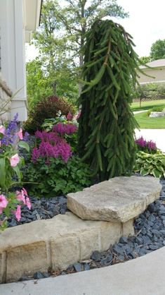 Limestone outcrop, Weeping Norway Spruce, Visions astilbe,