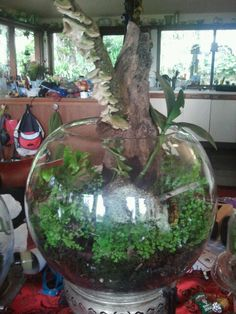 fern and fungus terrarium Andysart