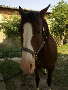 my horse Luna