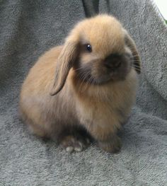 @SophieL02 this is like the cutest bunny I've ever seen!!