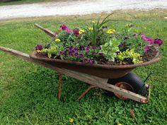 Wheel barrow planter. A great idea for that broken down rusty wheel barrow in my shed.