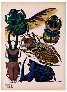 Seguy an artist, designer and etymologist was very prolific in the early part of the last century in France. This is part of a larger set of about 16 groups of Insects. Plate 15 shown here. The Beetles, Mantis Religiosa, Cool Bugs, Argentine, Beautiful Bugs, Insect Art, Nature Illustration, Bugs And Insects, Giclee Print