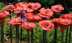 beautiful poppies  mooie papavers