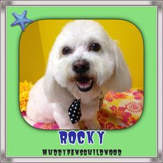 Say hello to Rocky. He's a star. Pet Grooming, Say Hello, Star, Pets, All Star, Stars, Animals And Pets, Red Sky At Morning