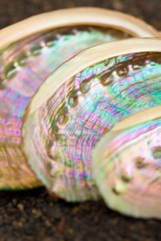 Iridescent Abalone Shells - My Grandfather has a stack of these on his back porch :)  Love them!! They are sooooo pretty.