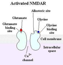 NMDA receptor - (memory, depression)