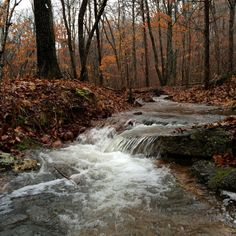 Taum Sauk Section of the Ozark Trail from Hwy A to Goggins on a rainy day in January 2015.