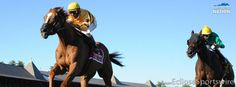 Wise Dan remains undefeated in 2013!
