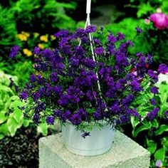 Plants Made for Containers! #gardening #flowers #beautiful