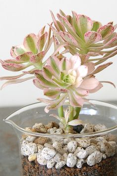 love this idea for #succulents. especially now living in MN. thanks, janel!