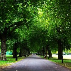 Battersea Park ...Before the park, Battersea fields was a popular location for dueling. In 1829, the Duke of Wellington and the Earl of Winchilsea dueled in the fields; the duke aiming wide, and the earl firing into the air.