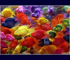 Colourful fish show in Taiwan