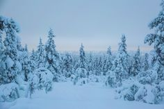 Winter in Finland is a magical experience! Here we list our top 8 recommended activities for a visit to Lapland! Stuff To Do, Things To Do, Forests, Finland, Wilderness, National Parks, Landscapes, To Go, Awesome