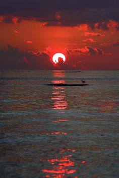 The brilliant red sun setting behind gray clouds is reflecting such a bright glow on the rippling waters that they seem to move in this nice photo. A pelican type water bird rests on a small land island at the photograph's center focus, like a shadow waiting for its evening fish dinner. -DdO:) - http://www.pinterest.com/DianaDeeOsborne/sky-lights - Beautiful pin via Magdalena Moryson