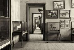 """Saatchi Art Artist Barry Iverson; Photography, """"The Horse Room, 2006"""" #art"""