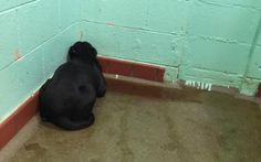 Depressed, Abandoned Dog Stared at Shelter Wall for Days - Then Something Amazing Happened