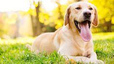 Adopter un chien ne devrait pas se faire sous le coup de l'émotion. Voici ce qu'il faut savoir avant d'en ramener un à la maison.