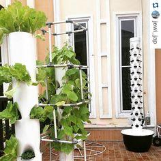 Tower Garden Vertical Farming #verticalfarming #thefutureoffarming #towergarden #rooftopgardening #growwithstyle #growvegetables #motherearth #nature #greenevironment #modernfarmer #artoffarming #vegetables #landscape #urbanfarming by dakotastyle03