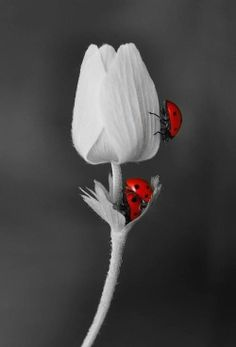 black, white and red