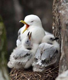 Kinds Of Birds, All Birds, Angry Birds, Love Birds, Pretty Birds, Beautiful Birds, Animals Beautiful, Exotic Birds, Colorful Birds