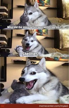 Husky jokes!