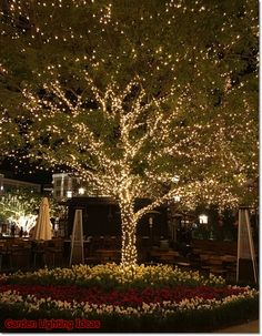 35 Inspiring Christmas Outdoor Lights Decoration Ideas - Outdoor lighting adds to the fun of Christmas. Many people have outdoor display for the holidays. It adds warmth and joy to the celebrations. Outdoor Tree Lighting, Outdoor Trees, Backyard Lighting, String Lights Outdoor, Outdoor Gardens, Lighting Ideas, Outdoor Fairy Lights, Fairy Lights In Trees, Backyard Trees