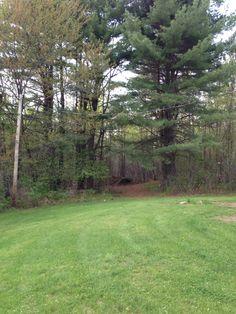 My back yard, and the bear path