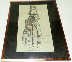 Cool vintage anatomy print- mounted and framed.