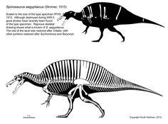 spinosaurus.jpg (1600×1192)