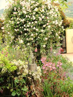 rose arbor, lavendar, daylillies & foxglove