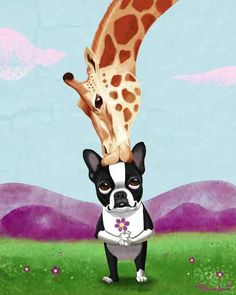 Boston Terrier and Giraffe Dog Art Print by rubenacker on Etsy, $18.00