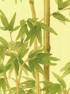 Green Bamboo Paradise Wallpaper By Brewster Traditional Echo Design Wallcovering Collection Interior