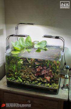 """""""Jade & Burgundy"""", 50 L Dennerle Scaper's Tank - by Marie-Sophie Germain, www.mariesophiegermain.com"""