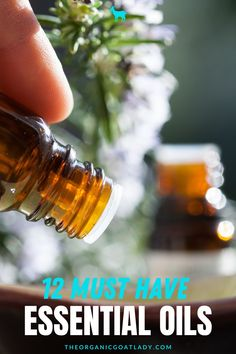 12 Must Have Essential Oils and their Benefits. If you are looking for which essential oils for beginners to have on hand, this is the list for you! Complete with their benefits and uses, this is a great introduction to the essential oils you need to have for a variety of health benefits and uses. Essential oil blends are great when you know which ones to combine. If you are new to essential oils, these are the best EO's to have in your home. Essential Oil Diffuser, Essential Oil Blends, Essential Oils, Aromatherapy Recipes, Wax Warmers, Carrier Oils, Kombucha, Hand Sanitizer, Kids Meals