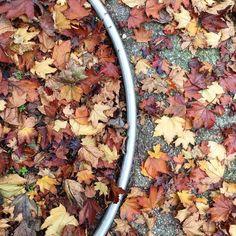 An autumnal bracket. #autumn #afternoon #leaves #metal #bracket #urban #igers #igersitalia #igersemiliaromagna #igersbologna