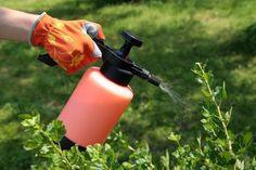 Preparados ecológicos para tratar las plagas en los cultivos A través de este compendio de agricultura ecológica recogemos información sobre preparados de insecticidas ecológicos para tratar las p…