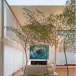 Árvores na sala