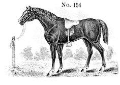 Horse No. 154