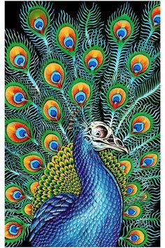 Emek Peacock Poster 18 x 24