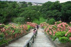 Ecopark, Quezon City Philippines    Photo by Krys Laquindanum